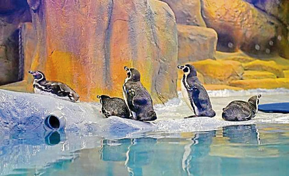The civic administration had proposed the hike after the Humboldt penguins started to attract crowds to the zoo.