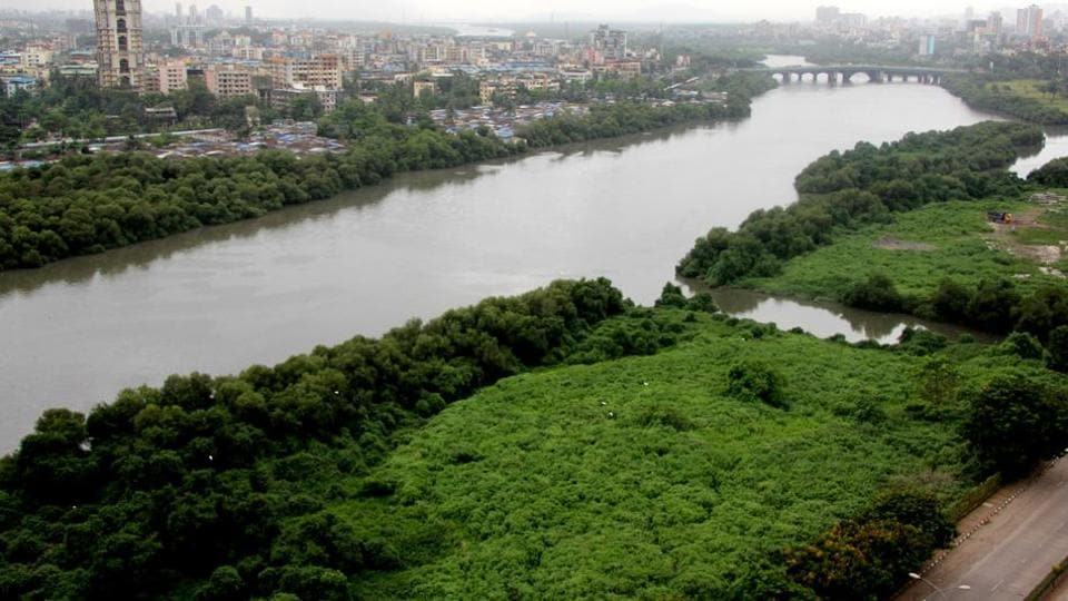 Mumbai will lose 1% of its total mangrove cover to the costal road project.