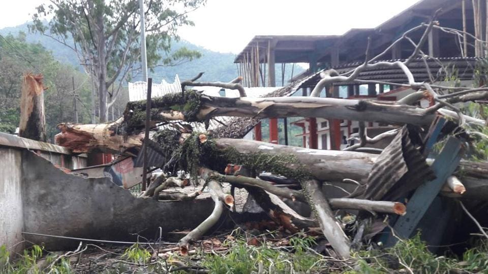 Many trees were uprooted in Mizoram as cyclone Mora hit the northeast on Tuesday.