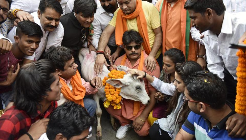 BJP Yuva Morcha activists offering pooja of a Calf during protest near AICC against slaughter of Cow by the Youth Congress Leader in Kerala, in New Delhi, India, on Tuesday, May 30, 2017.