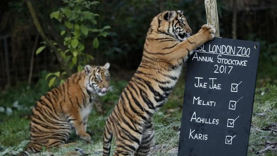 The tiger never escaped from the enclosure, and police said foul play was not suspected in the keeper's death.