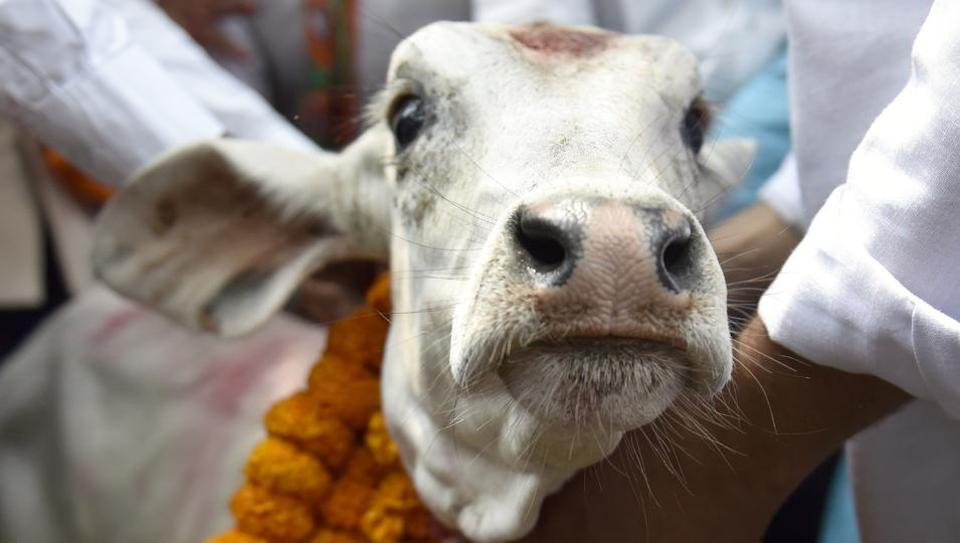Beef price,Kerala cow slaughter,Cow slaughter