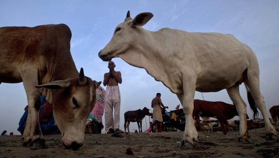 Several state governments have criticised the ban on cow slaughter as a blow to beef and leather exports.