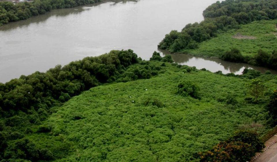 Drones,Mangroves,mumbai mangroves