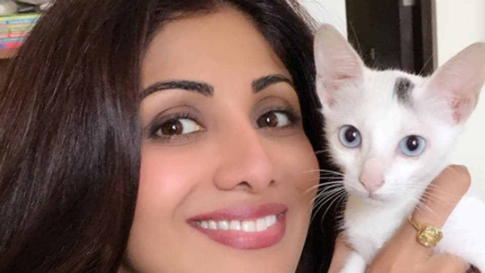 Actor Shilpa Shetty temporarily adopted a stray cat Queen. She also has a cat named Simba and a dog named Champagne.