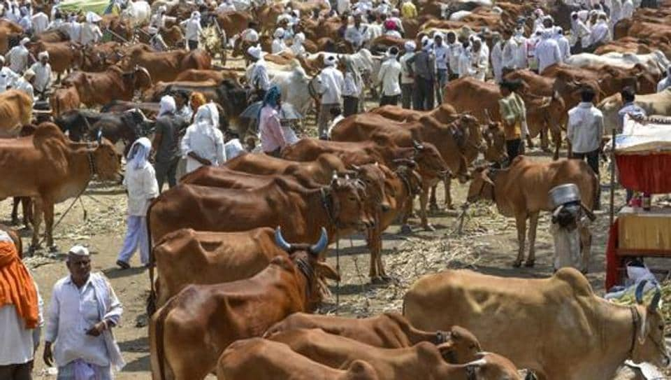 After Kerala, Karnataka, now Tripura government opposes cattle slaughter ban