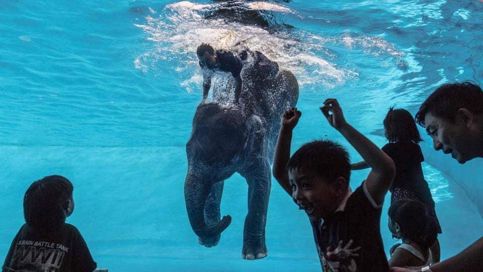 A boy reacts as Saen Dao, an eight-year-old female asian elephant performs underwater during a show . (Roberto SCHMIDT / AFP)
