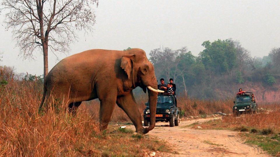 Uttarakhand news,elephants,Corbett