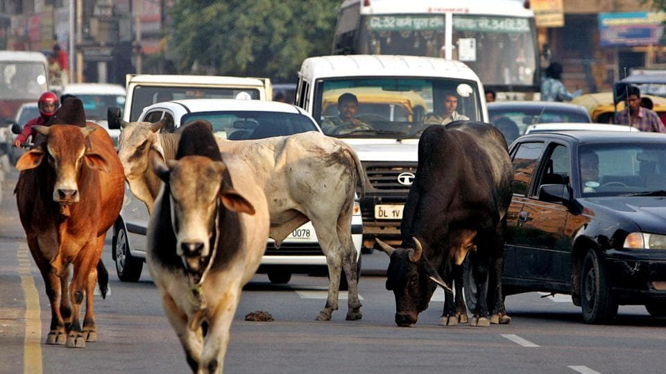 The driver of the police's Dial 100 jeep lost control of the vehicle in an effort to save a cow.