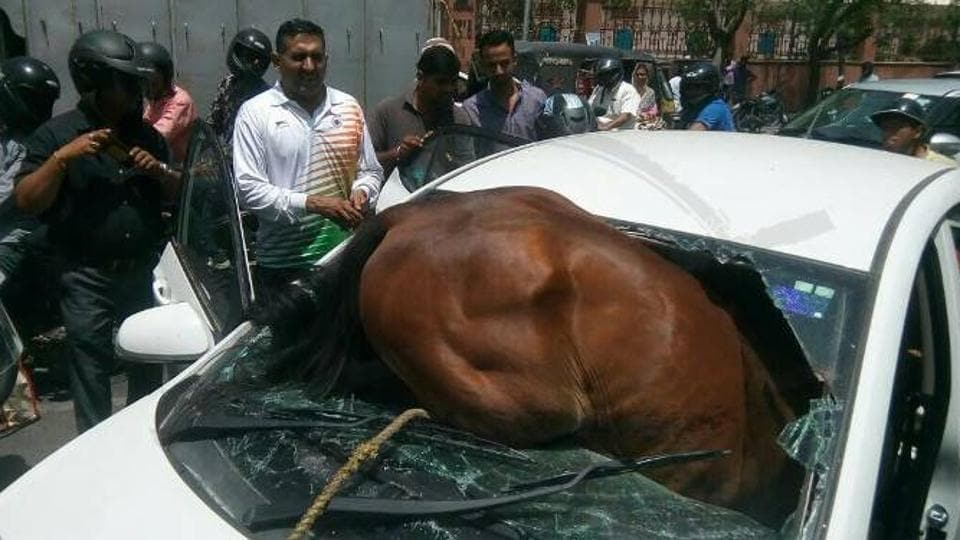 Horse rams into vehicle windshield in Jaipur