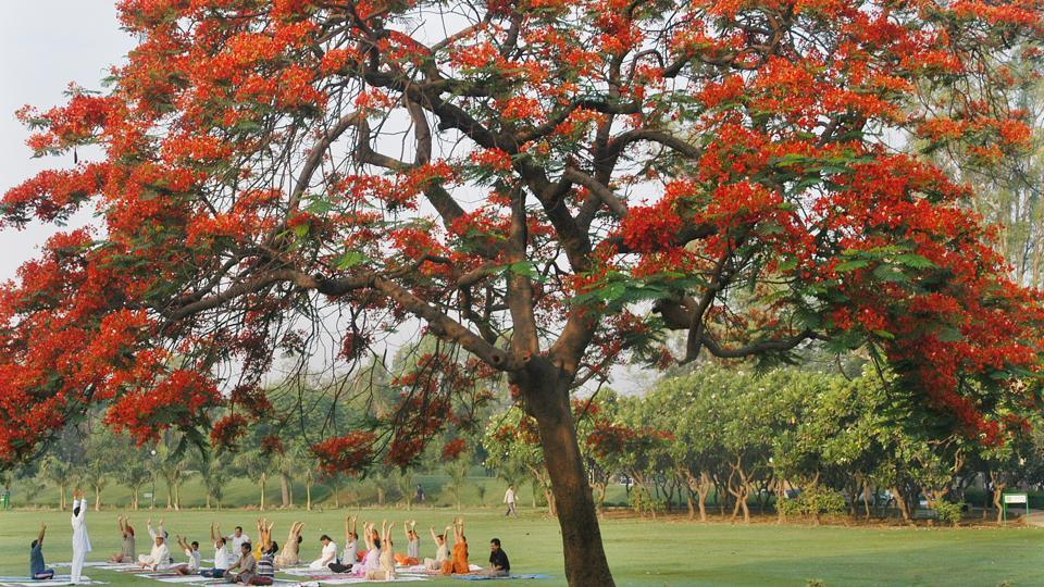 The government and local authorities claim that during plantation drives the focus is on trees which flourish in the city. (Vipin Kumar / HT Photo)