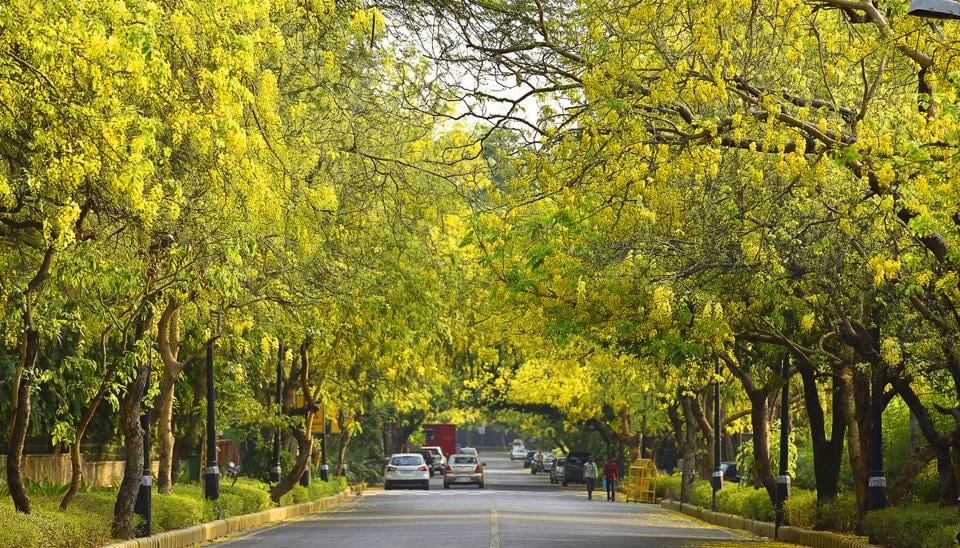 While more than eight lakh saplings comprising trees, shrubs and herbs are planted across Delhi every year, experts have raised questions on whether the right species are being planted. (Sanjeev Verma / Hindustan Times)