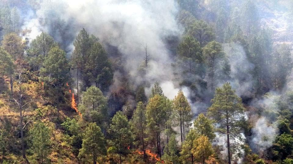 Forest officials are praying for rain as it helps in containing wildfires which peaked in summer.
