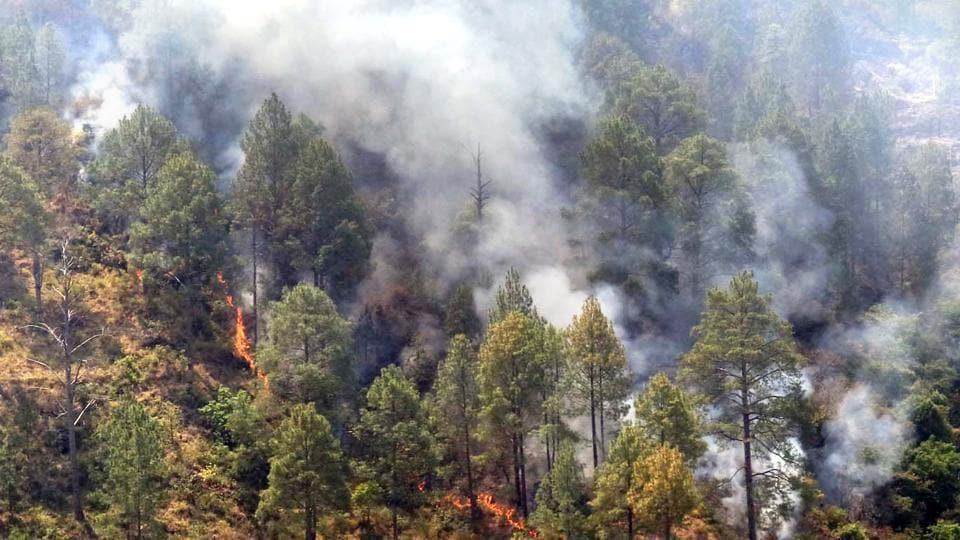 Uttarakhand,wildfires,Kumaon