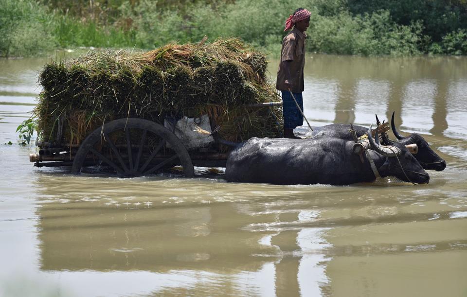 Assam floods,Assam rivers,Assam rain