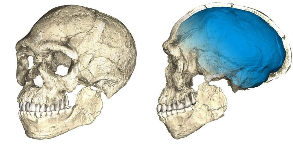 Two views of a composite reconstruction of the earliest known Homo sapiens fossils from Jebel Irhoud in Morocco, based on micro computed tomographic scans of multiple original fossils, are shown in this undated handout photo. Dated to 300 thousand years ago these early Homo sapiens already have a modern-looking face that falls within the variation of humans living today.