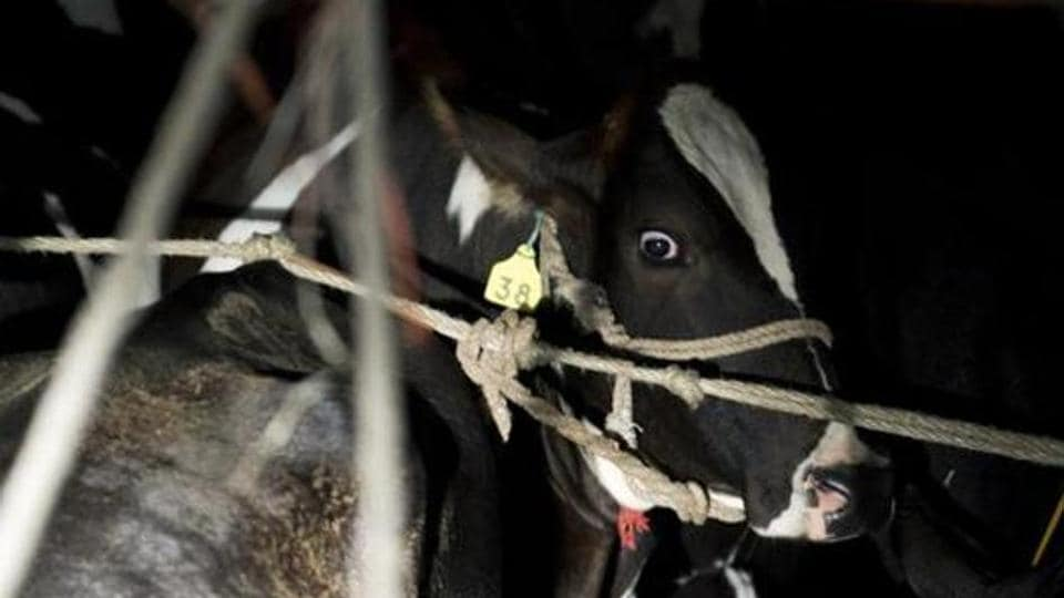 Cow slaughter is banned in BJP-ruled Jharkhand, with police as well as self-declared cattle protection groups out to identify offenders.