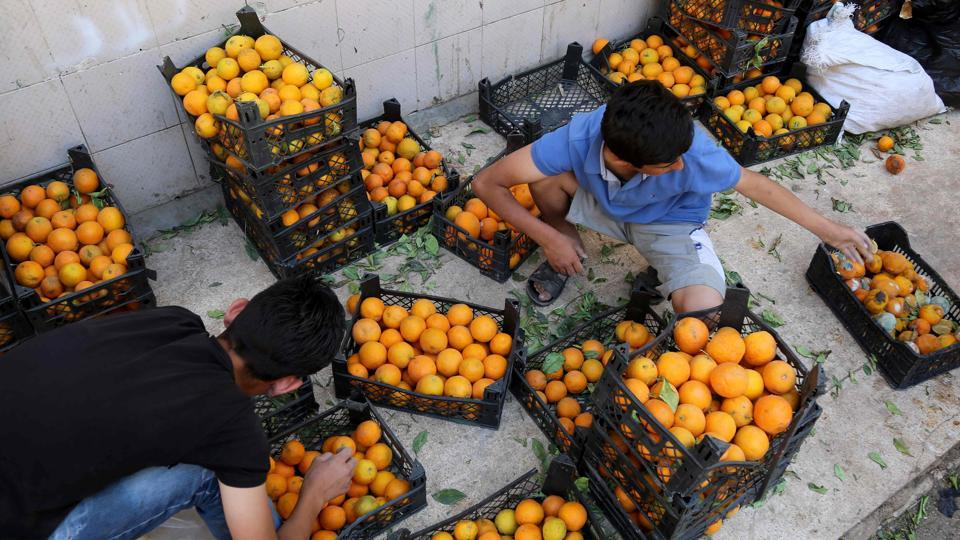 Syrians sort oranges at a market in the northeastern Syrian city of Qamishli  on the eve of Ramadan. (AFP)