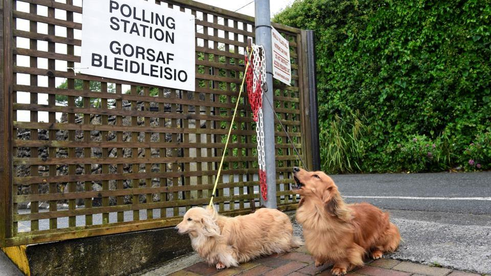 Dogs wait for their owner outside a polling station in Penally, Wales, Britain. (Rebecca Naden / REUTERS)