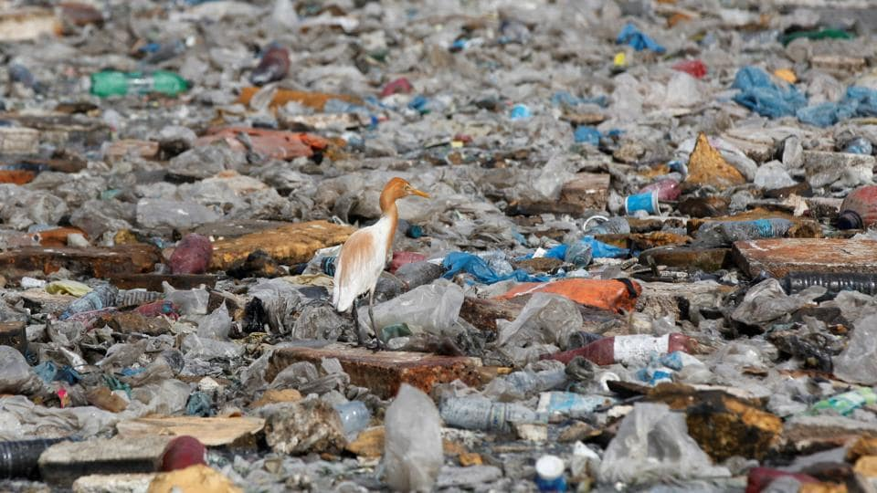 A migratory bird rests amid  garbage dumped along sea waters in Karachi, Pakistan. (Akhtar Soomro/REUTERS)