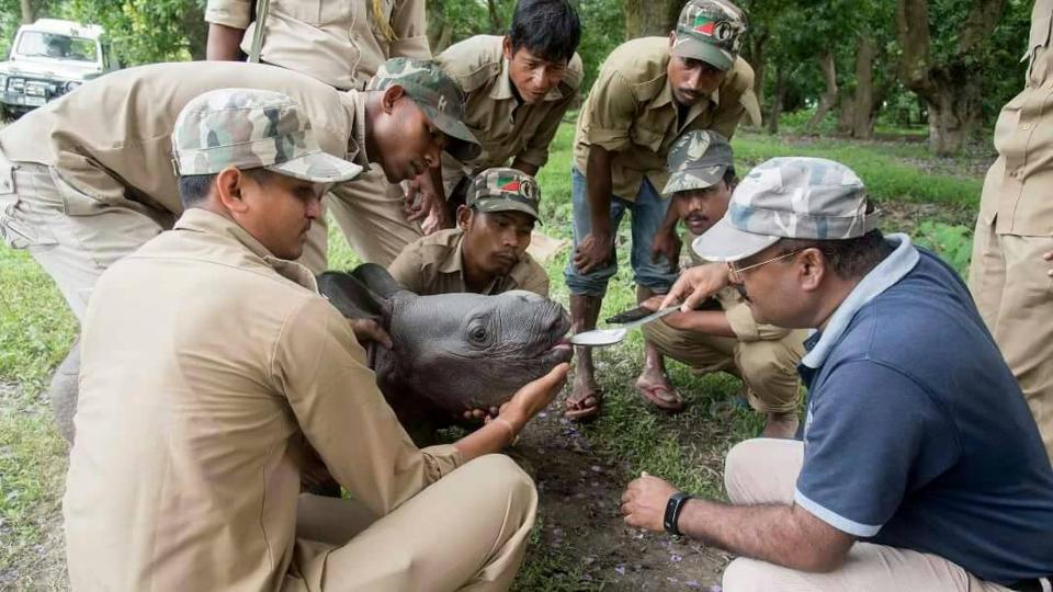 Rhino,Pobitora,Pobitora Wildlife Sanctuary