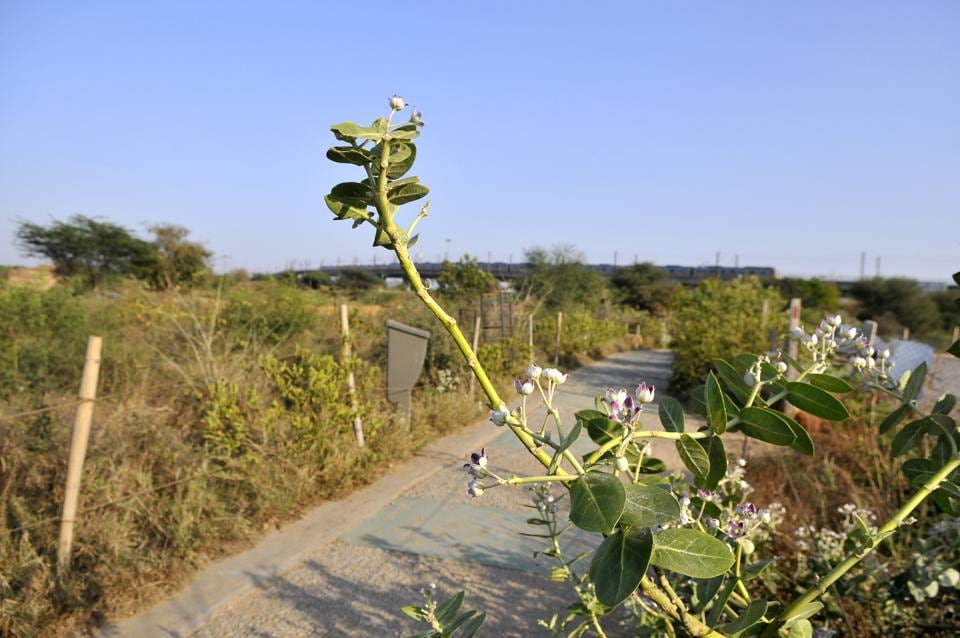 File photo of the Aravali Biodiversity Park.  A tussle is on between the Haryana government and environmentalists over the Aravali Natural Conservation Zone at the National Green Tribunal