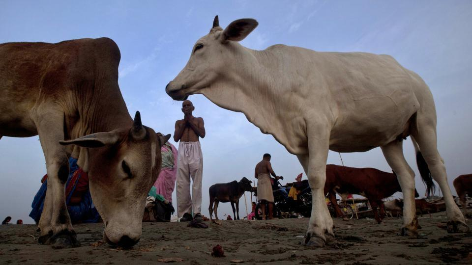 Hyderabad high court,Cow slaughter,Non-bailable offence