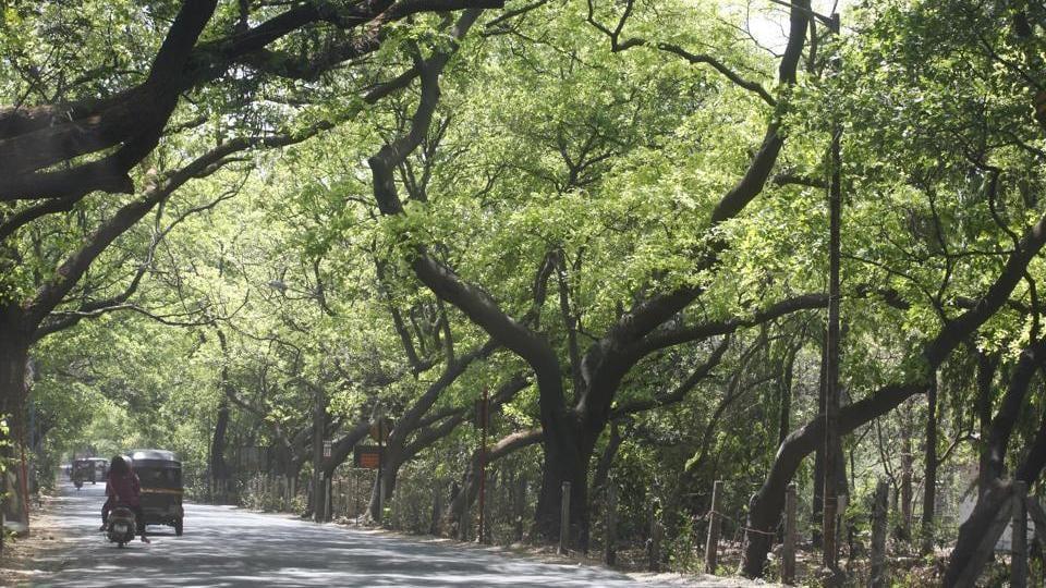 Aarey Colony,Green spaces,mumbai environment