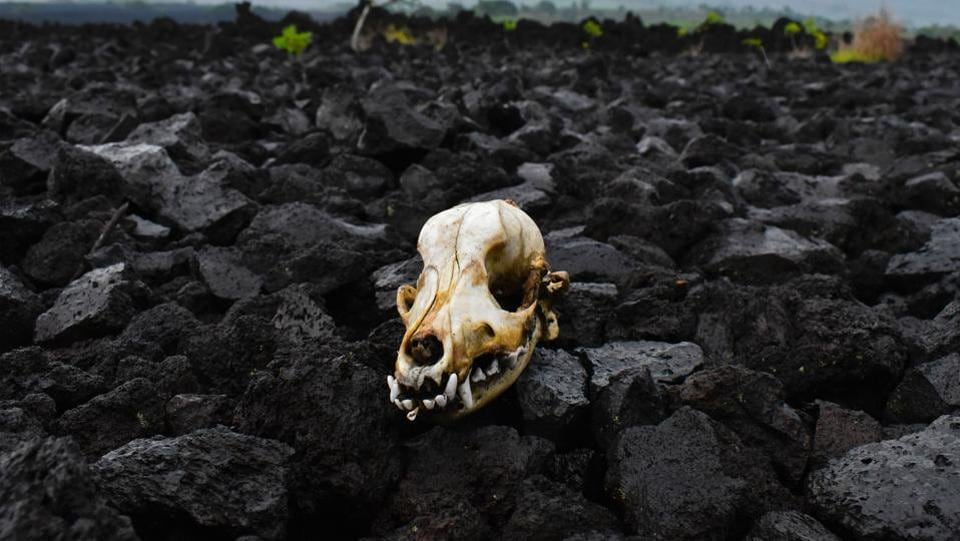 A skull seen amid volcanic stones in the area of El Playon, after the eruption of the San Salvador volcano, in Quezaltepeque, 21 km from San Salvador. Geologists and volcanologists mentioned in the 13th Congress of geologists in a hotel of San Salvador, which Central America throughout its history has lived with volcanoes, making it the only defence against danger is its monitoring. Currently ten volcanos remain active in Guatemala, Nicaragua, Costa Rica and El Salvador.  (Oscar RIVERA / AFP)