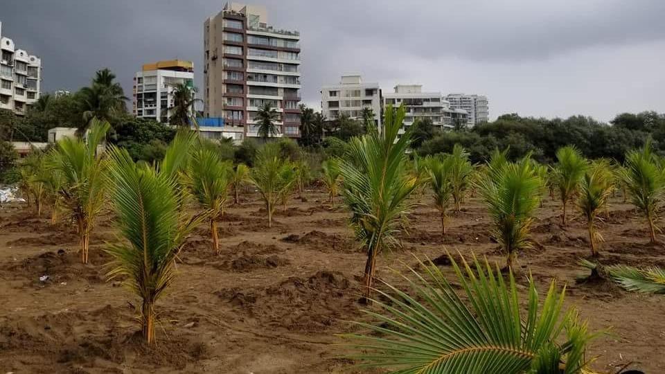 Mumbai city news,Versova beach,beach clean-up