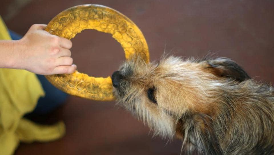 Dog Killed,Delhi,Cruelty to animals