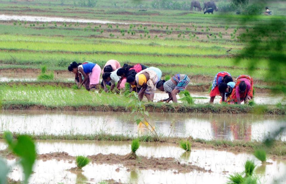 Mumbai city news,farmers,kharif season
