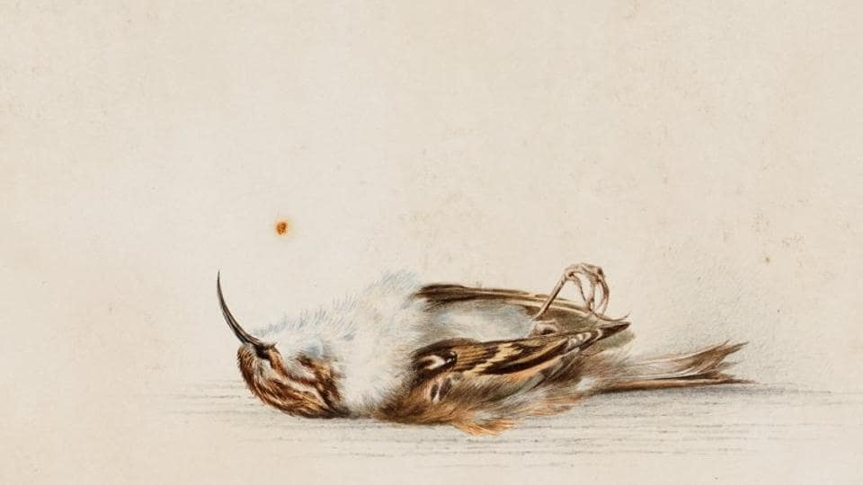A 118-year-old watercolour painting was discovered inside a hut in Antarctica.