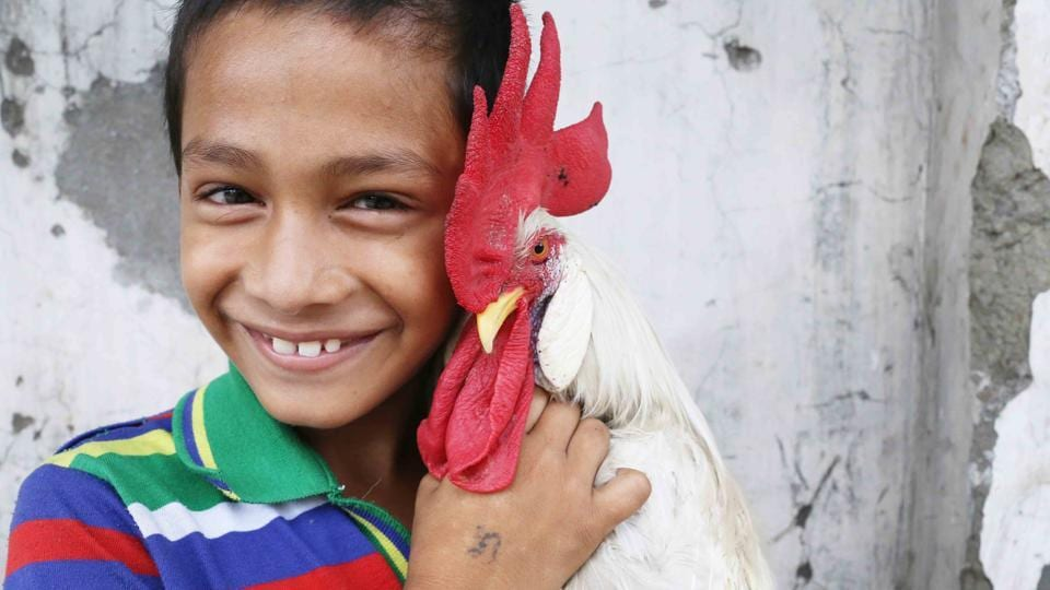Mithun with his pet rooster Tippu.