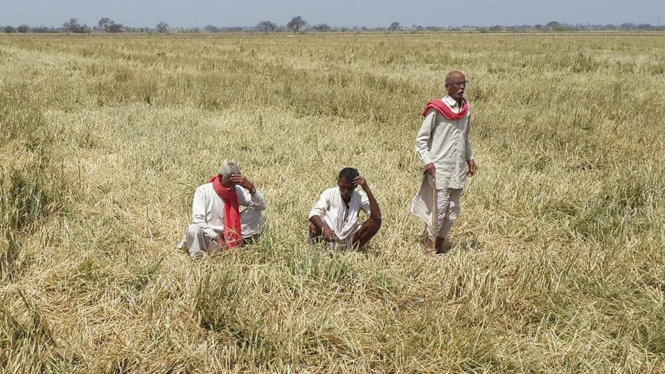 Mansaur violence,Farmers' crisis,Agriculture