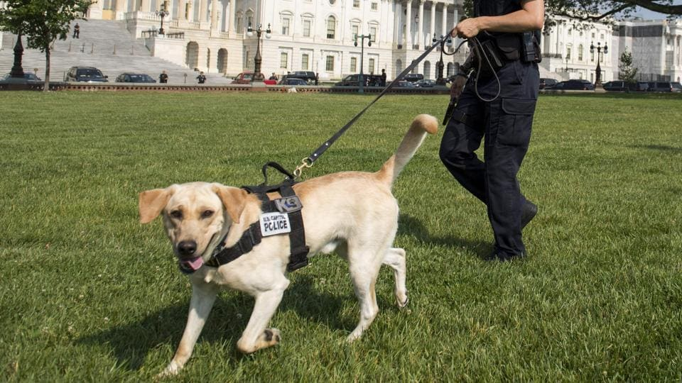 A Capitol Police Officer and police dog patrol around the US Capitol in Washington, DC as security was increased following the shooting incident.  (Saul Loeb/AFP)