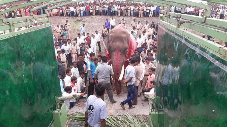 Gajraj entering the Wildlife SOS elephant ambulance.