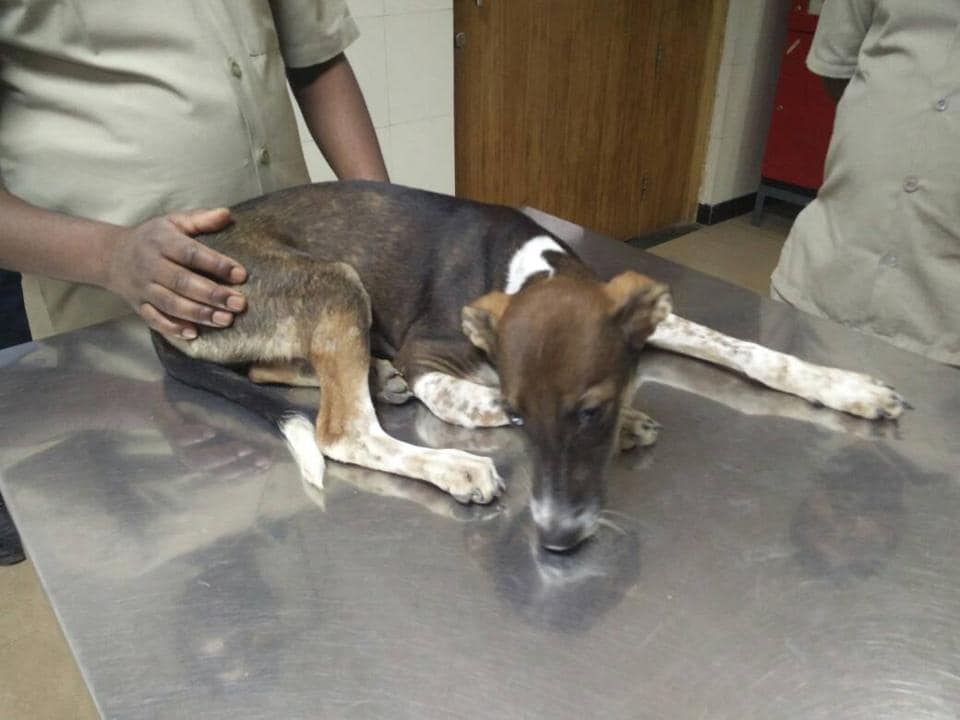 The dog is presently in the custody of the Fauna Police, the NGO.