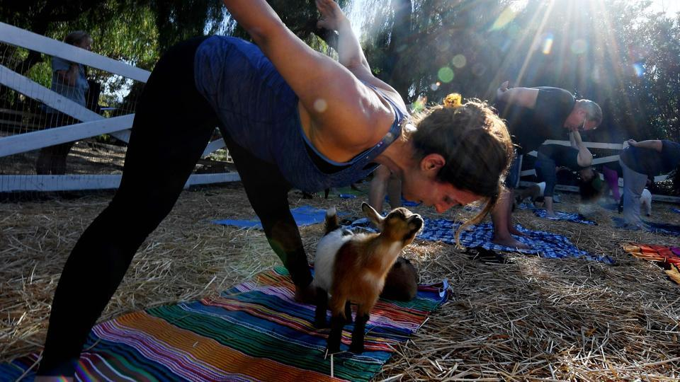 Yoga instructor Meridith Lana teaching her students  yoga at Lavenderwood Farm in Thousand Oaks. (AFP)