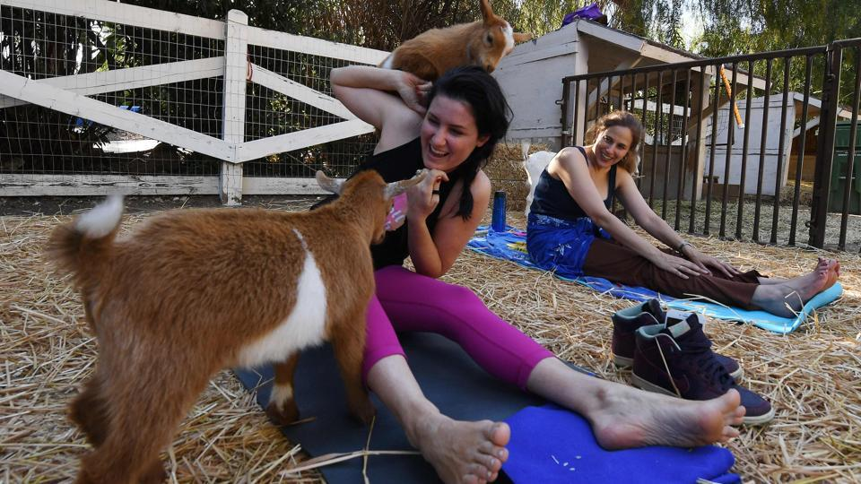 Lily Reel struggling to maintain her concentration during a  Yoga' class. (Mark RALSTON / AFP)