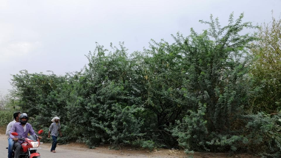 The forest cover of the Aravallis is said to be decreasing fast.