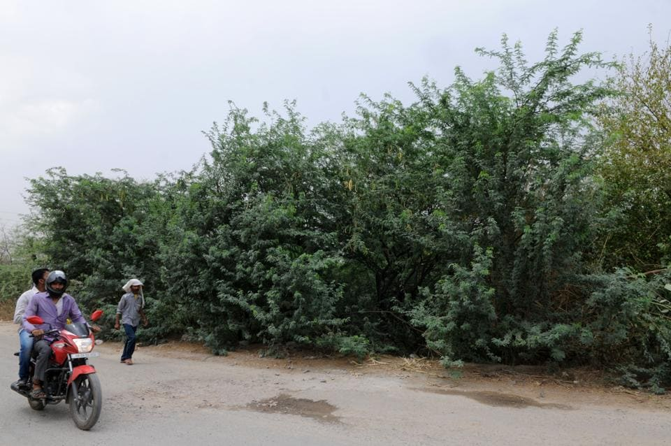 There are restrictions in place with regard to tree felling and construction activities in the Aravallis.