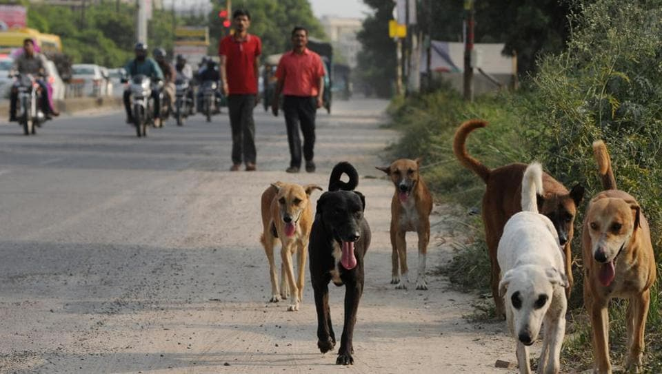 Despite crores allocated by the three municipalities to sterilise dogs, the cases of dog bites have remained unarrested over the years.