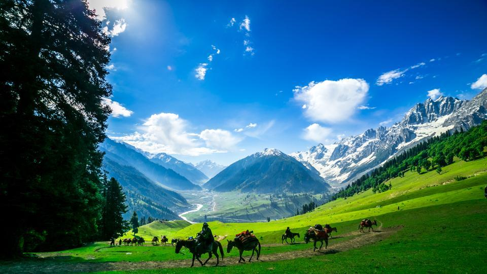 Horses grazing on a hill in Kashmir.