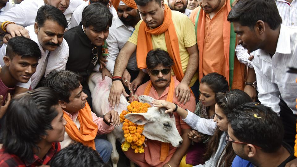 BJP Yuva Morcha activists protest in New Delhi against slaughter of Cow .