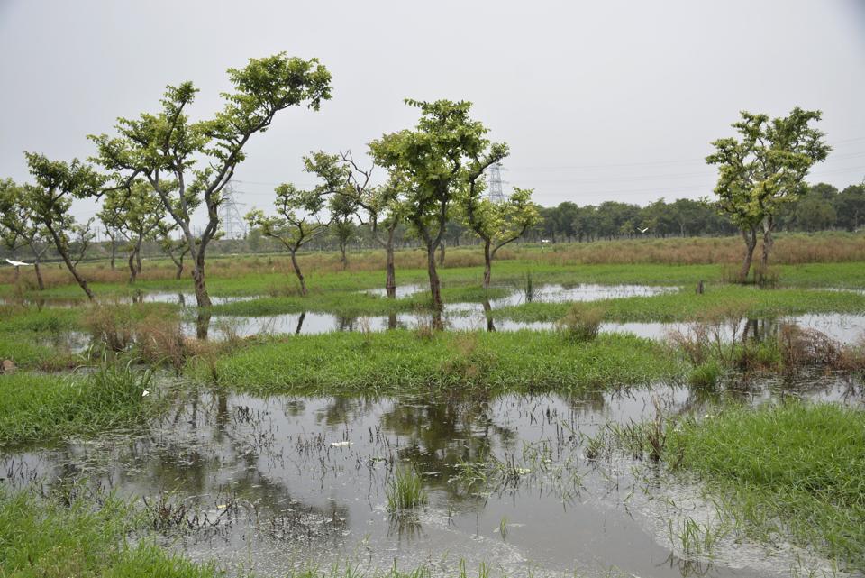 Ghaziabad,tree cover,monsoon