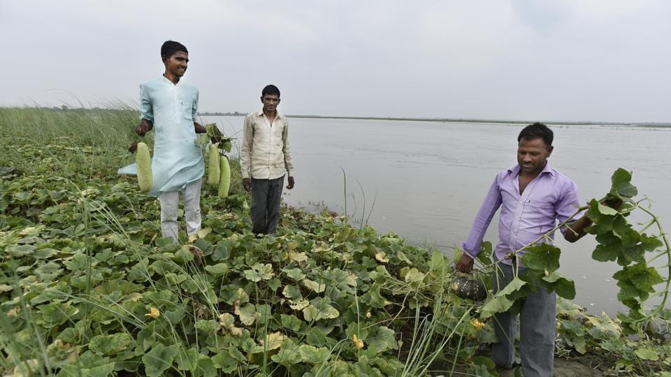 When the rivers were flourishing waterways, the Mallahs were traditional boatmen ferrying people. With waterway navigation shrinking, they took to fishing, but  fishing contracts being sold to the highest bidder by the government, reduced them to farming watermelons, cucumbers, bottle-gourd and muskmelon by the river bank. (Burhaan Kinu/HT PHOTO)