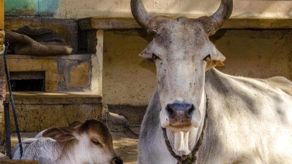 On March 25, Swamy had introduced a Private Members' Bill in the Rajya Sabha that seeks death penalty for those who slaughter cows.