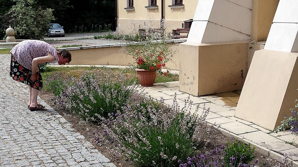 Garden therapy,Horticulture therapy,Poland