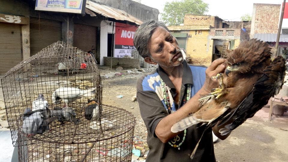 Pardeep Kumar more than 300 animals in his brood which includes 200 pigeons who are with him since two decades, a herd of rabbits, ducks, monkey who is living with him past 15 years, cats, a few vultures and eagles with whom he connects making different noises. (Sameer Sehgal/HT Photo)